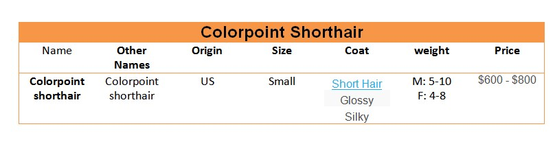 Colorpoint-Shorthair-price