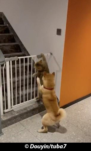 funny-cats-and-dogs-new