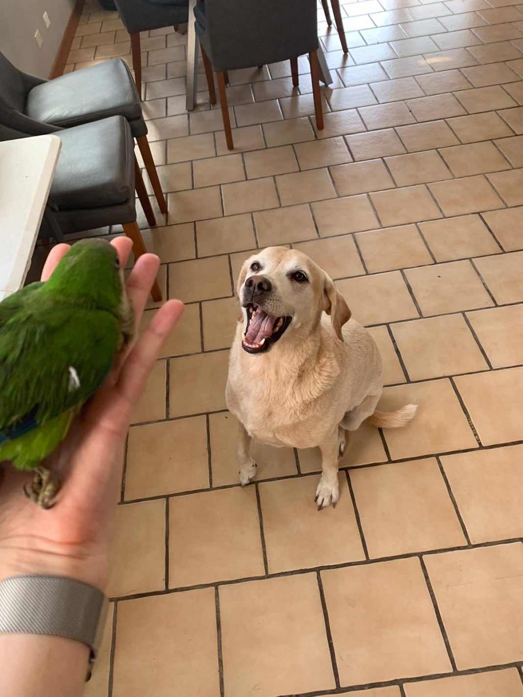 dog-save-baby-parrot