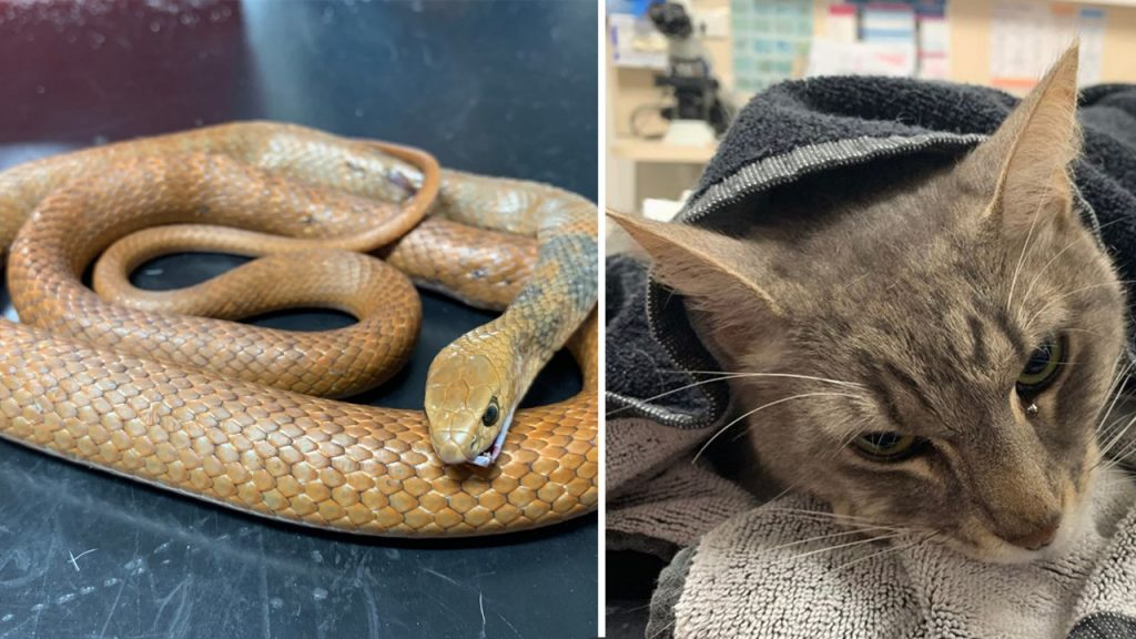 hero-cat-rescue-children-from-deadly-snake